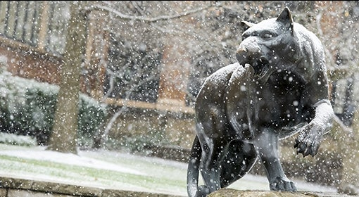 Panther in snow