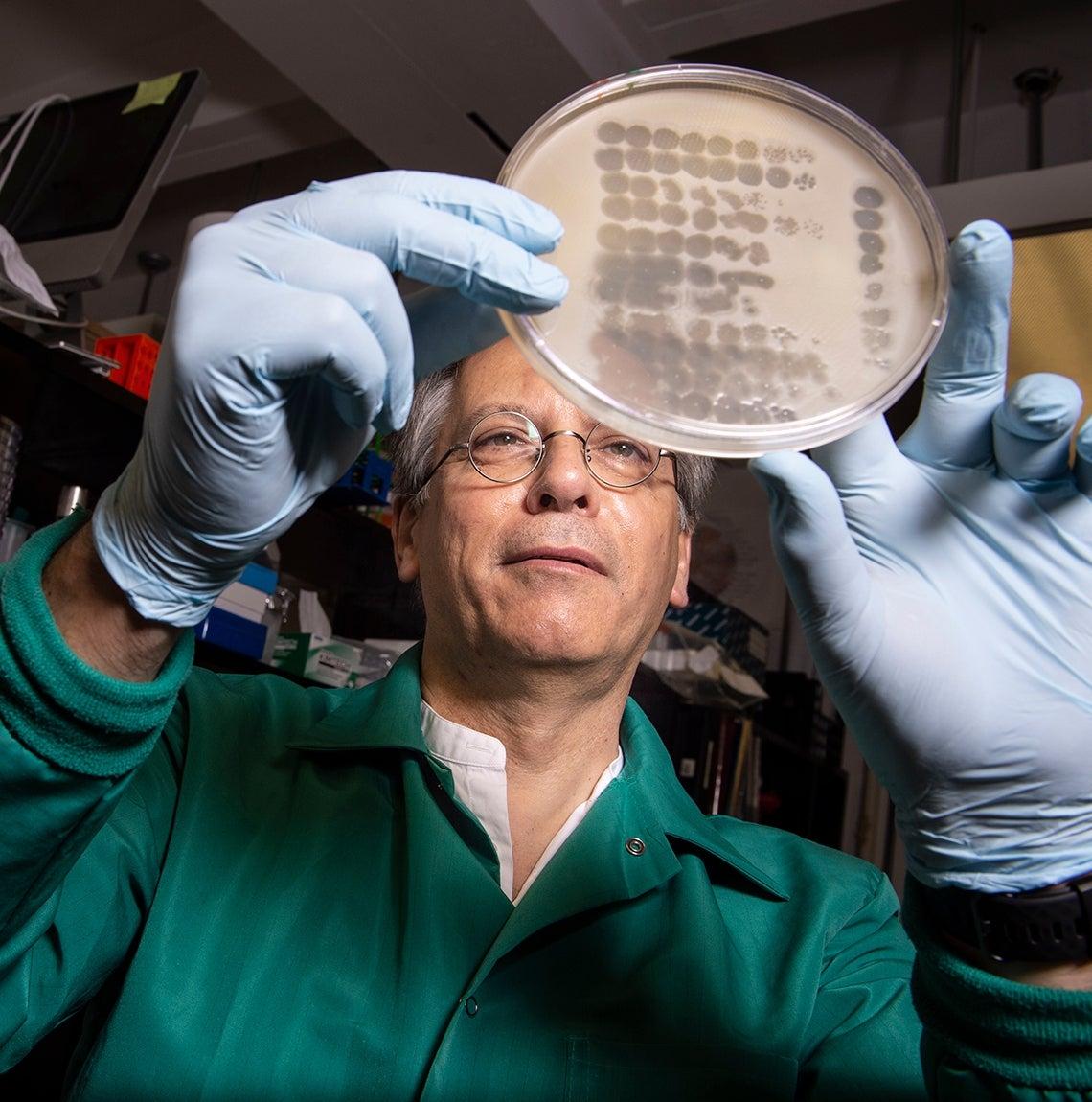 Graham Hatfull looks at a petri dish